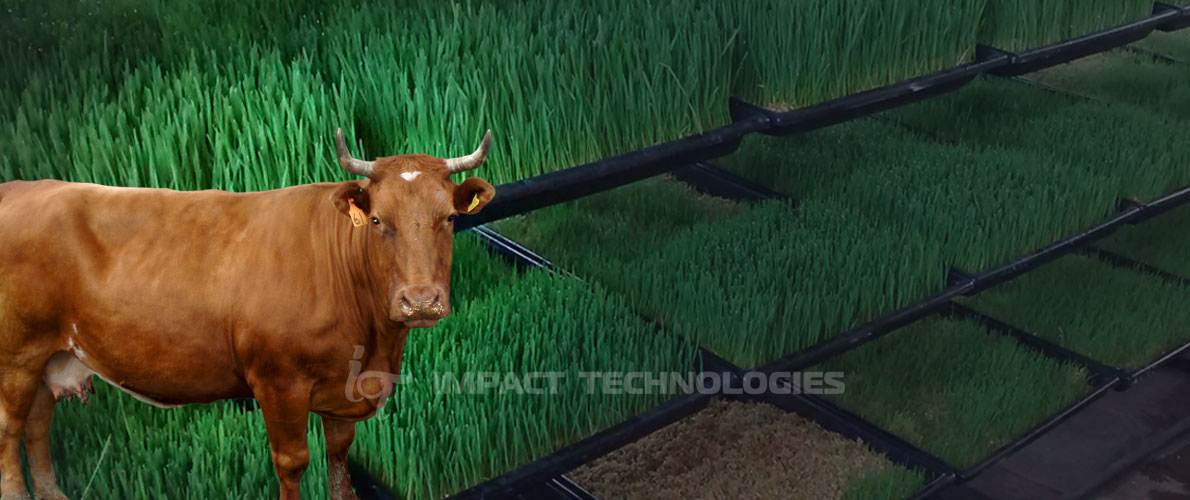 impact technologies - milking machines in bangalore karnataka